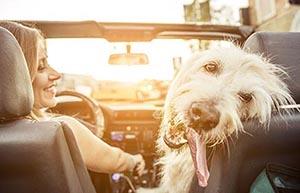 Dog appreciates las vegas mobile mechanics